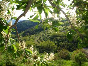 Chorwacja północna - roślinność